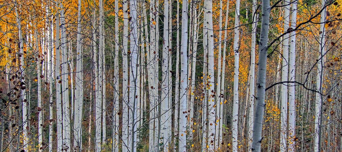 Se skogen för alla träden